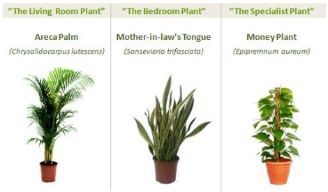 plantas-purificadoras-del-aire